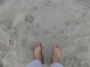 Picture of feet on a beach with bird tracks